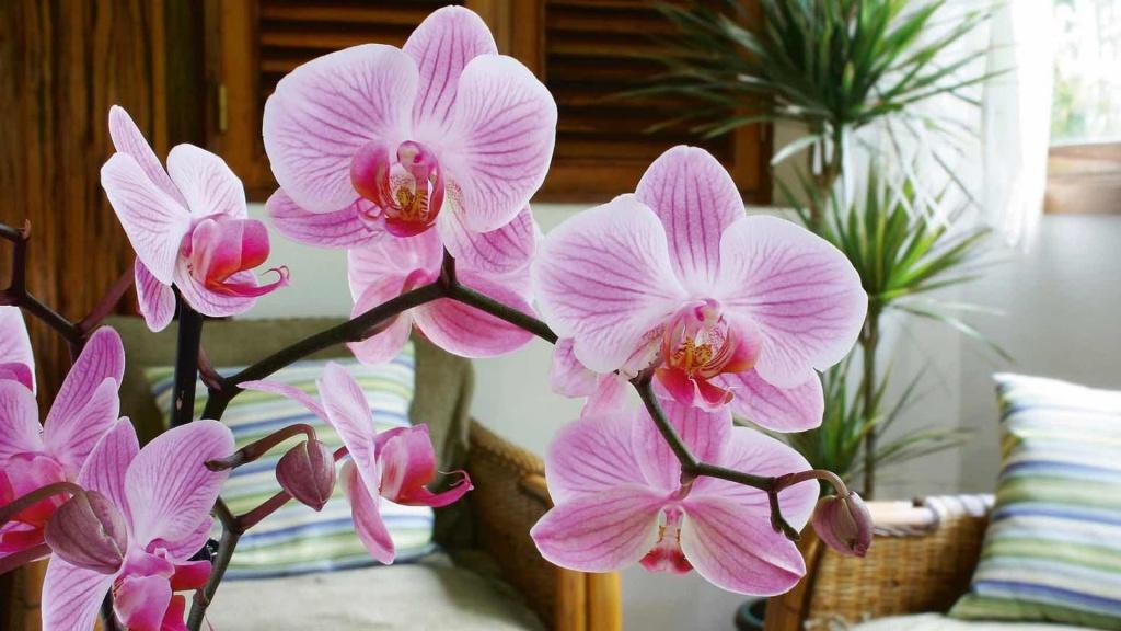 орхидея и уход за ней в картинках логическое задание этой