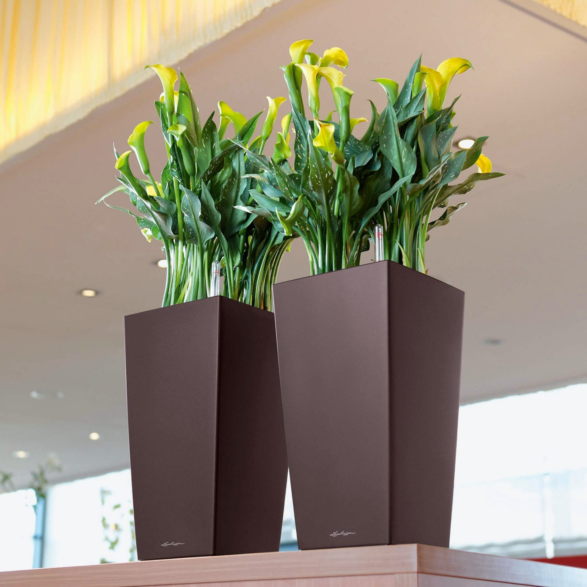 Купить офисные растения великие луки